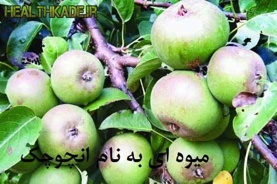 میوه ای به نام انچوچک